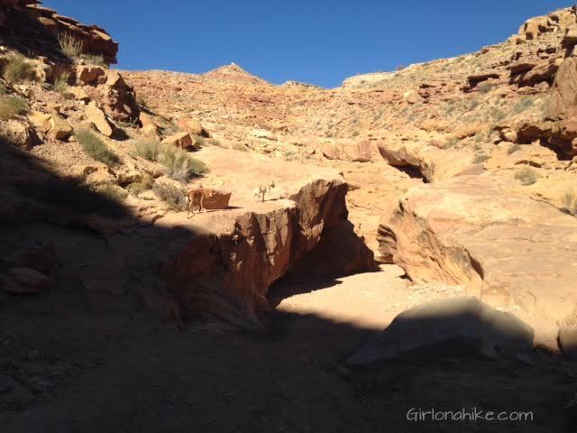 Hiking Little Wild Horse Canyon, Utah