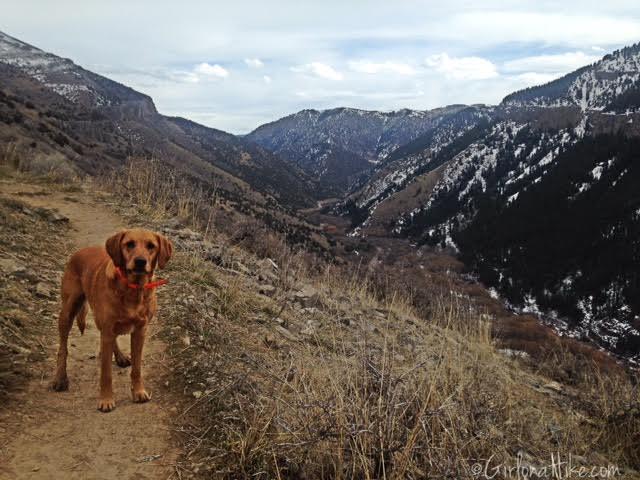 Wind Caves Trail, Logan, Utah, Hiking in Logan Canyon, Hiking in Utah with dogs