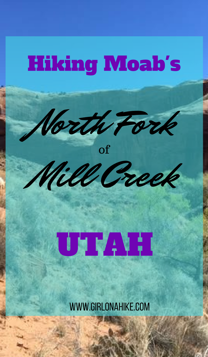 North Fork of Mill Creek, Moab, Hiking with Dogs in Moab, Utah