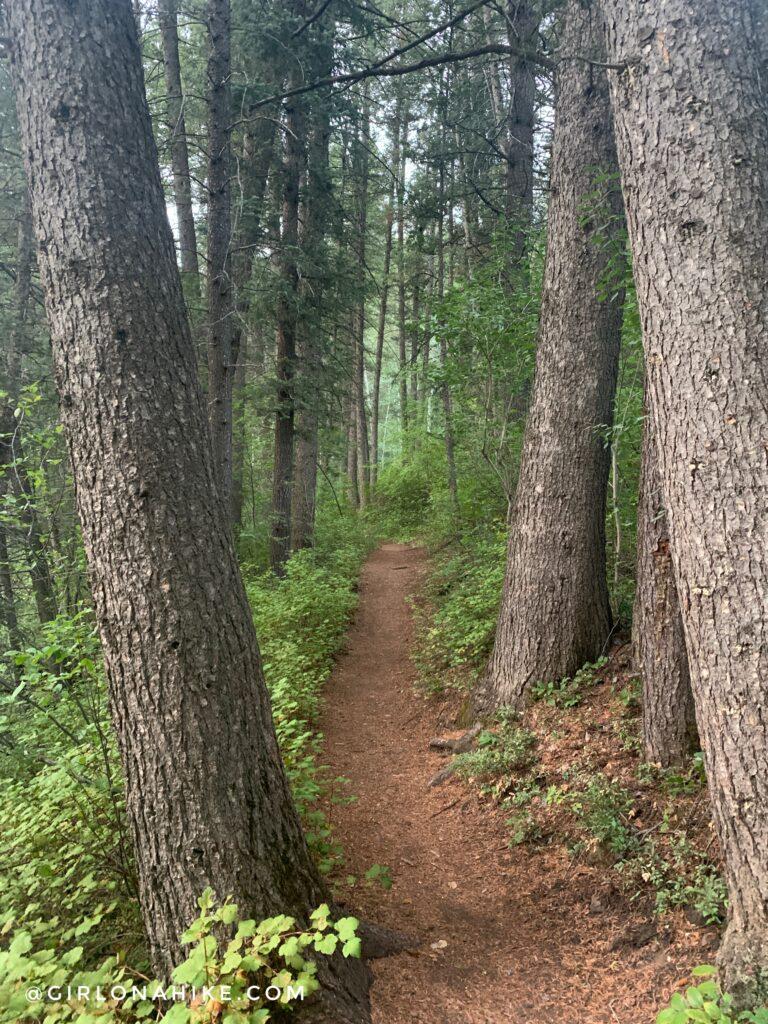 Hiking Lambs Canyon