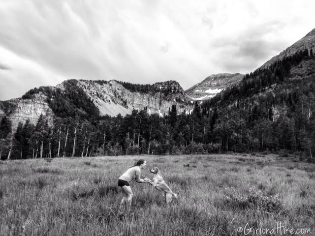 Hiking to Julie Andrews Meadow, Hiking in Utah with Dogs