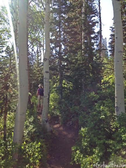 Hiking the Red Cloud Trail, Deer Valley Ski Resort