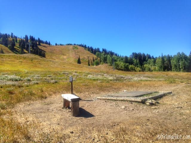 Playing Disc Golf at Solitude Mountain Resort