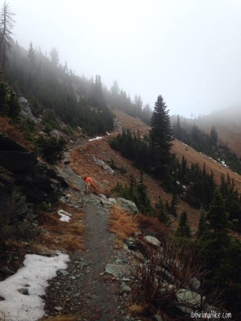 Hiking to Willard Peak & Ben Lomond Peak, Hiking in Utah with Dogs