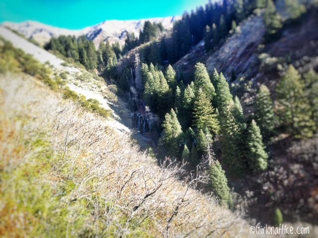 Hiking Grove Creek Canyon, Hiking in Utah with Dogs, Hiking in Utah