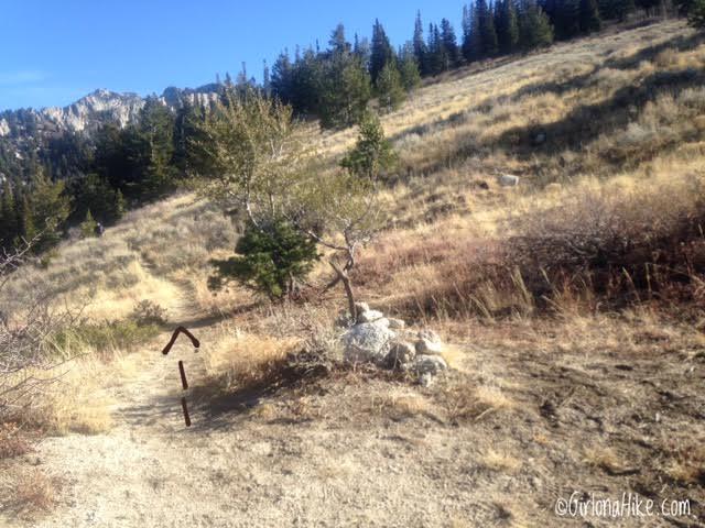 Hiking Lone Peak from the Cherry Canyon Logging Trail, Peak Bagging in Utah, Lone Peak Wilderness