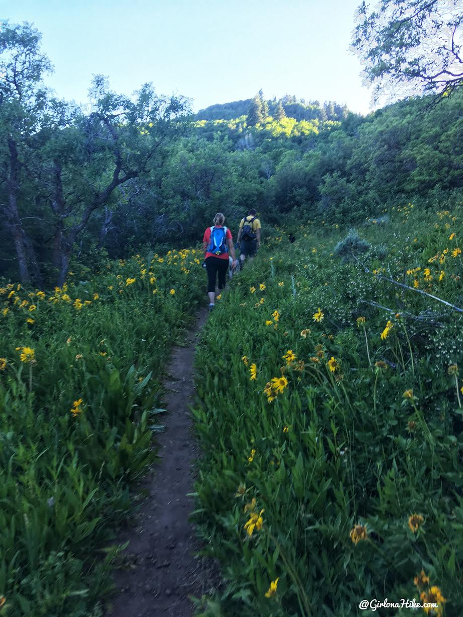 Hiking the Moose Hollow Trail