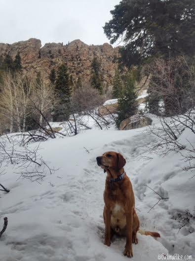 Hiking Mt. Olympus, Hiking in Utah with Dogs, Utah peak bagging