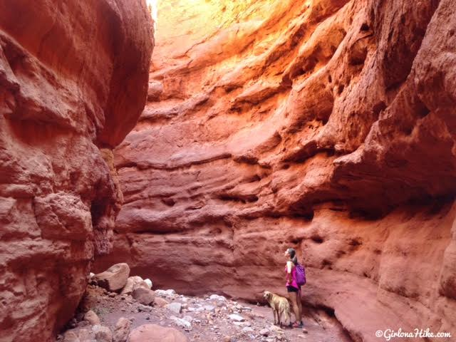 Hiking Mary Jane Slot Canyon, Moab, Hiking in Moab with Dogs, Slot Canyons in Moab