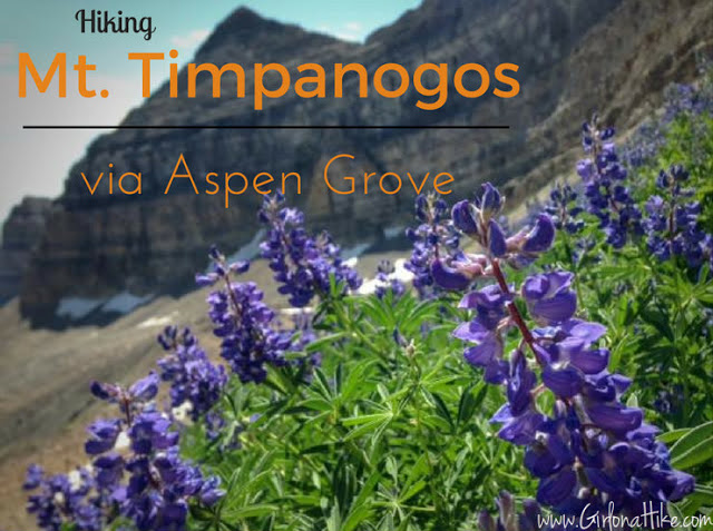 Hiking Mt. Timpanogos from Aspen Grove
