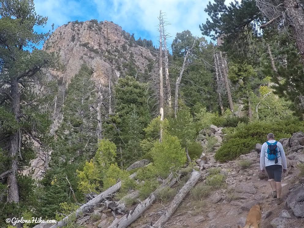 Hiking to Signal Peak, Pine Valley Mountains, Washington County High Point