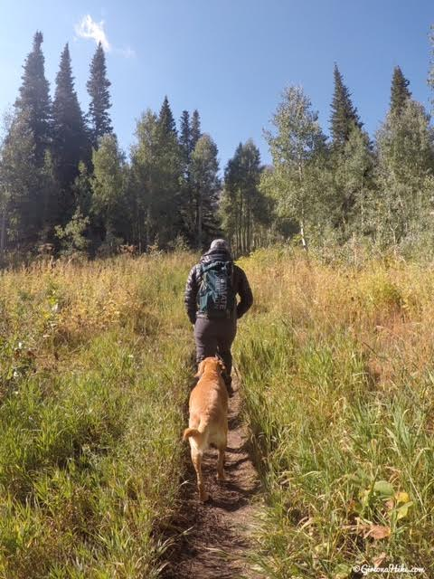 Hiking to the Primrose Overlook, American Fork Canyon