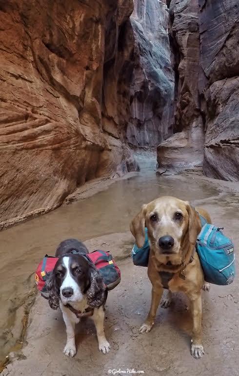 Backpacking Buckskin Gulch - Wire Pass to White House, Backpacking Buckskin Gulch with Dogs