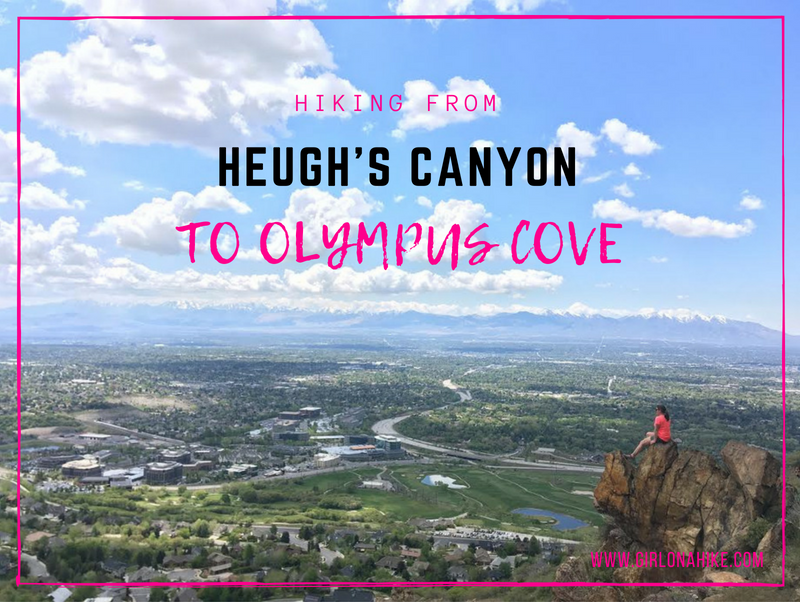 Hiking from Heugh's Canyon to Olympus Cove, Bonneville Shoreline Trail, Hiking in Utah with Dogs