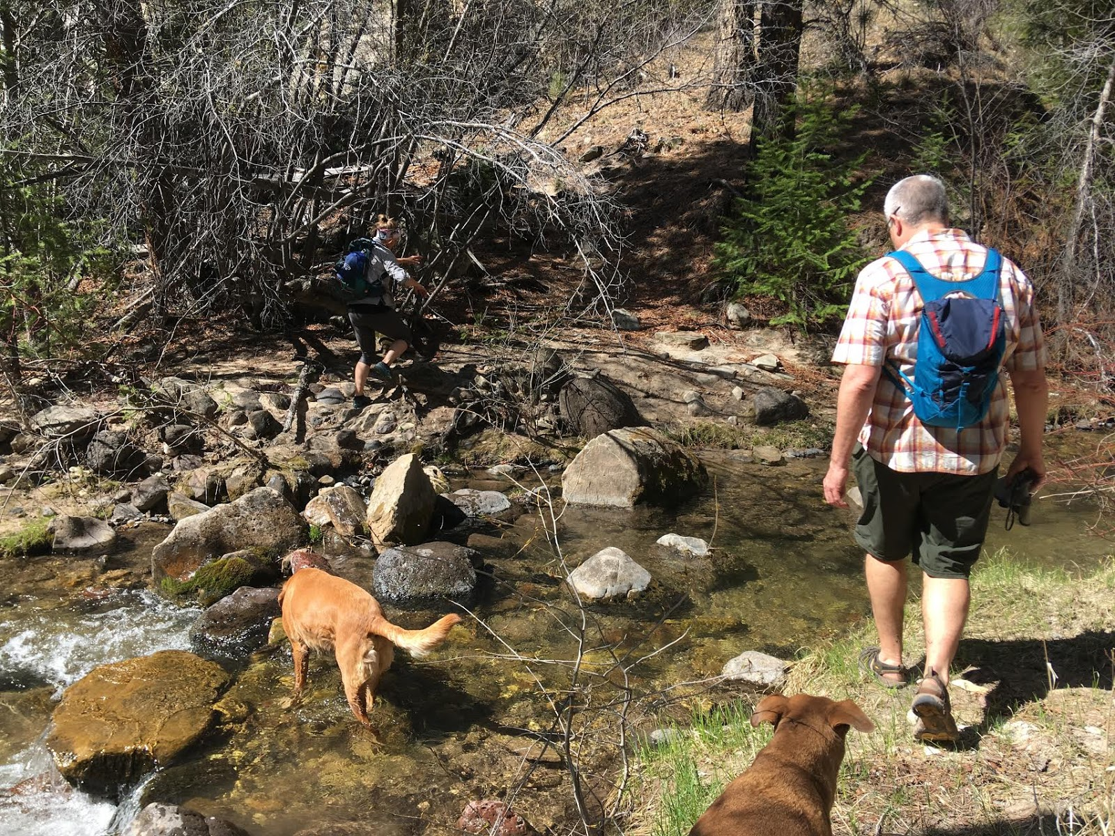 Hiking Pine Creek (The Box Trail) in Escalante, Utah, Hiking in Grand Staircase Escalante National Monument, Hiking in Utah with Dogs