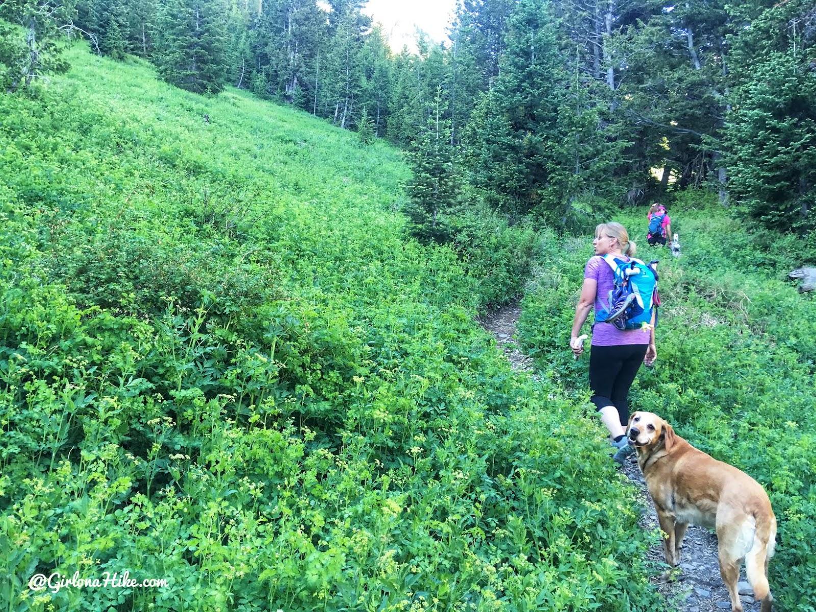 Hiking to Deseret Peak, Utah's Ultra Prominence Peaks, Hiking in Utah with Dogs