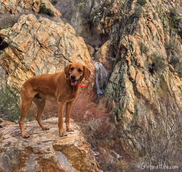 Heugh's Canyon Waterfall, Utah, Hiking in Utah with Dogs