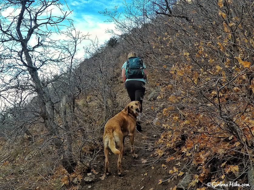 Hiking to the Ferguson Canyon Overlook, Ferguson Canyon trail, Hiking in Utah with dogs