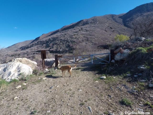 Hiking to The Grotto - Hornet Canyon, Hiking Steed Creek in Farmington, Utah, Hiking in Utah with Dogs