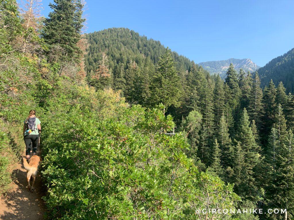 Hiking the Bowman Fork Trail