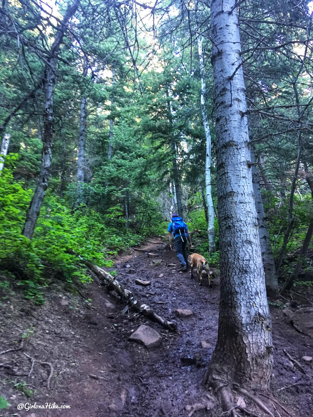 Hiking to Mt. Aire, Hiking in Utah with Dogs
