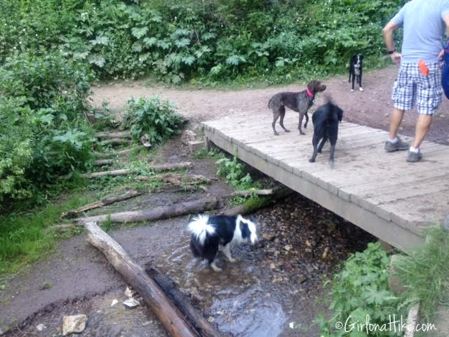 Hiking to Dog Lake, Hiking in Utah with Dogs, Millcreek Canyon