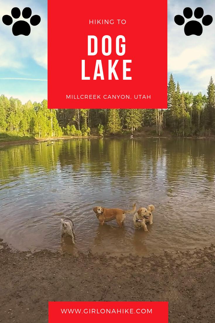 Hiking to Dog Lake, Millcreek Canyon, Utah, Hiking in Utah with Dogs