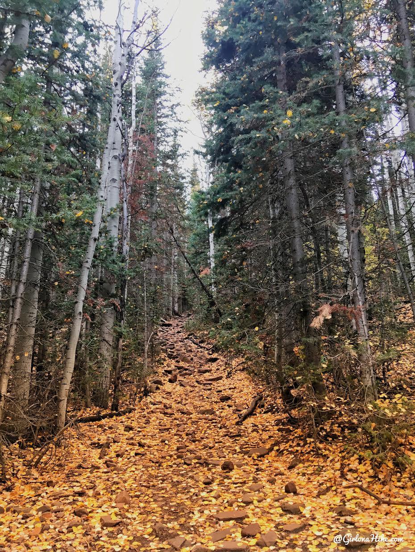 Hiking Iron Canyon, Park City, Utah, Hiking in Utah with Dogs