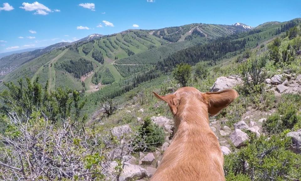 Hiking Iron Canyon in Park City