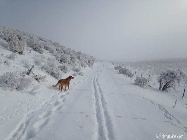 Hiking to 12 Mile (Bishop Creek) Hot Springs - in Winter!, Wells, Nevada Hot Springs, Hot Springs in Nevada