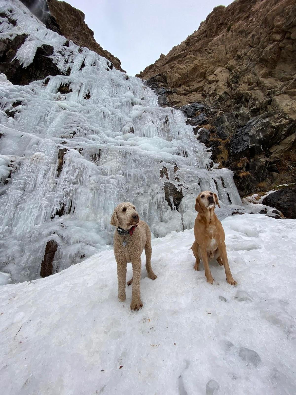 Hiking Waterfall Canyon in Ogden, Utah, Hiking in Utah with Dogs, Frozen Waterfalls in Utah, Ogden BST Christmas Tree
