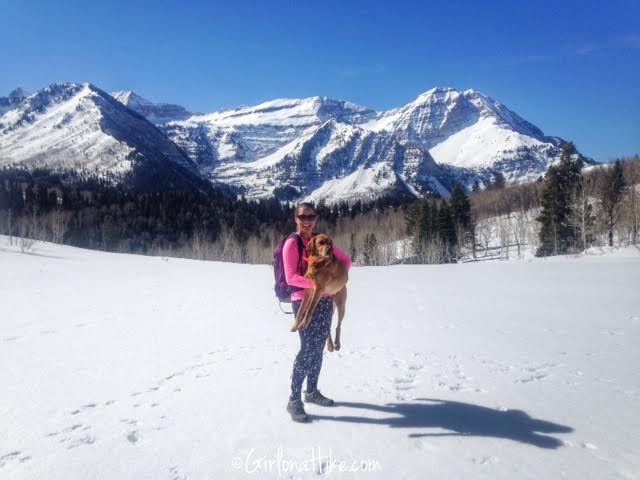 Pine Hollow Trail, American Fork Canyon, Hiking in Utah with Dogs