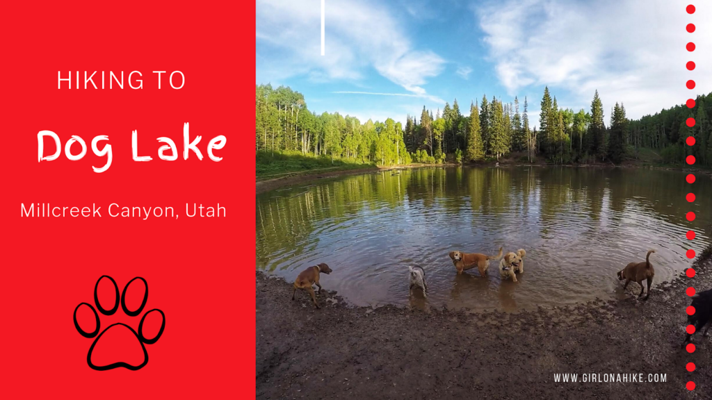 The 7 Best Trails in Millcreek Canyon, hike to dog lake millcreek canyon