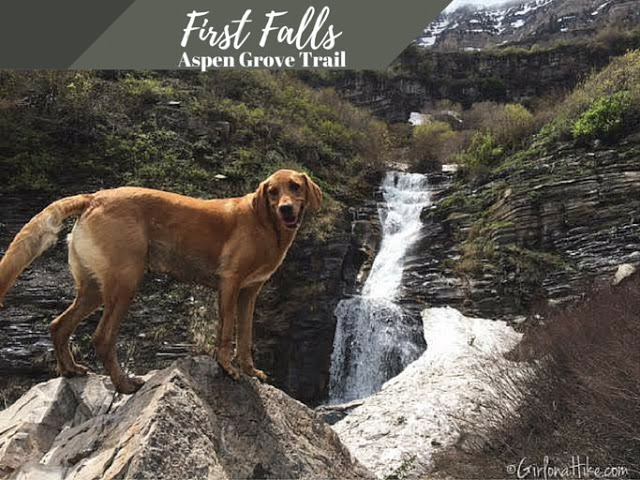 The Top 10 Hikes in American Fork Canyon, American fork canyon best hikes and trails, best views in American fork canyon, First Falls