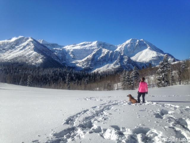 Hiking the Pine Hollow Trail, American Fork Canyon, Hiking in Utah with Dogs