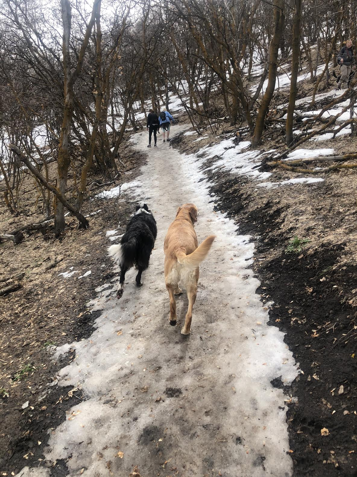 Hiking the Wild Rose Trail