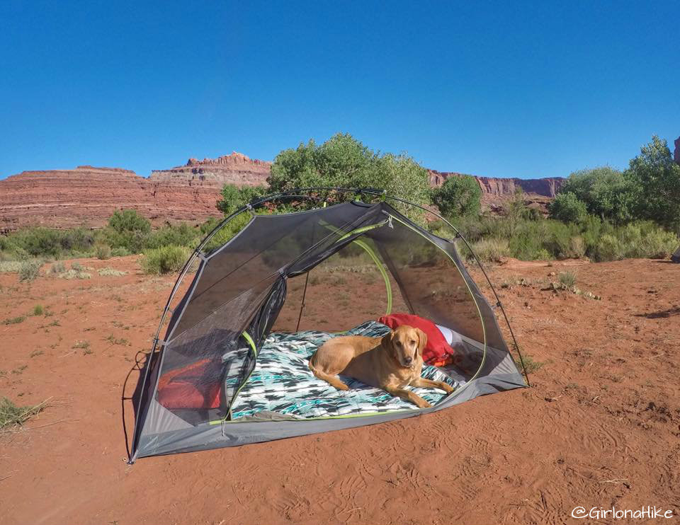 6 Tips to Keep Your Dog Warm while Camping
