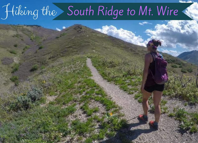 Hiking the South Ridge to Mt. Wire, Hiking in Utah with Dogs