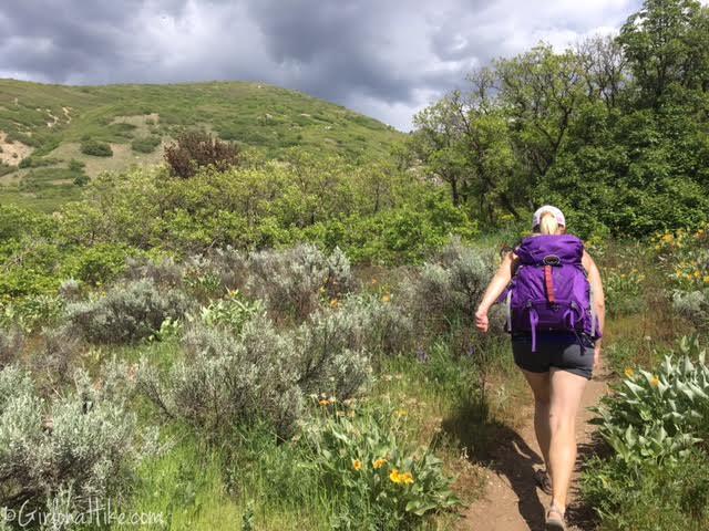 Davis Creek Waterfall, Davis Creek Trail, Hiking in Utah with Dogs