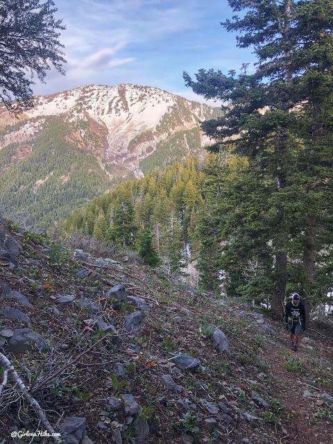 Hiking to Thaynes Canyon Peak, Hiking in Utah, Hiking in Utah with Dogs