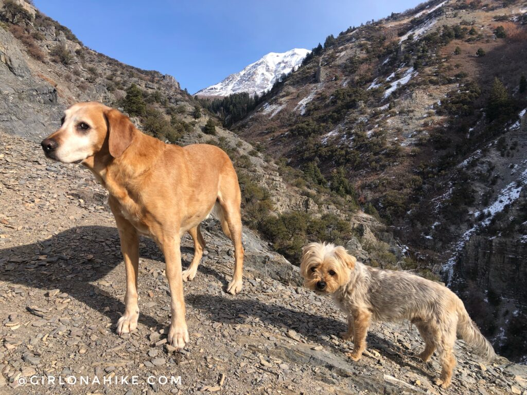 Hiking Grove Creek Canyon
