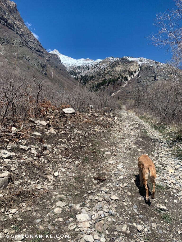 Hiking to Lost Creek Falls, Provo Canyon