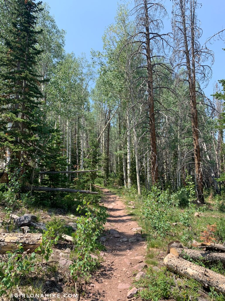This trail is officially called The Whiskey Trail, which leads to Bourbon Lake.