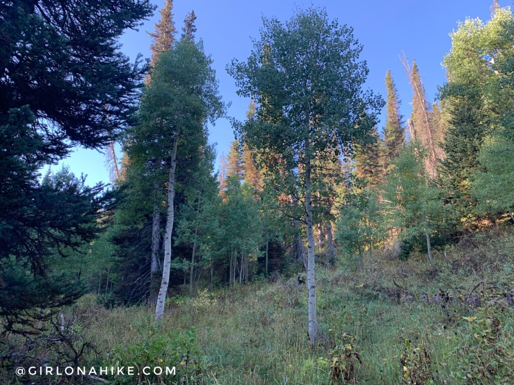 Hiking Toll Canyon, Summit Park